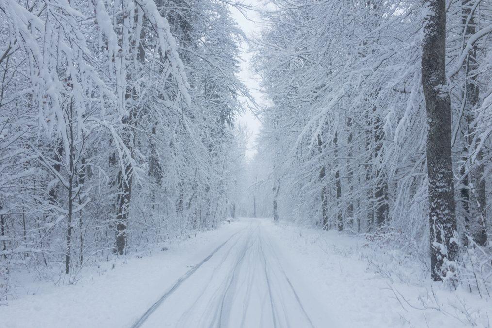 Verschneiter Weg durch den Stadtwald
